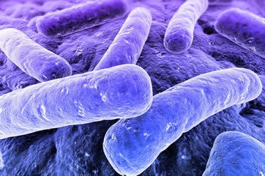 Barrow Legionnaires disease outbreak of 2002