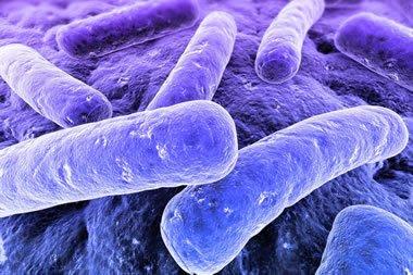 Barrow Legionnaires disease outbreak of 2002